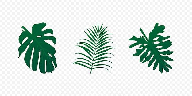 Conjunto de folhas tropicais realistas. folha de palmeira e árvores exóticas verdes isolada. ilustração vetorial eps 10