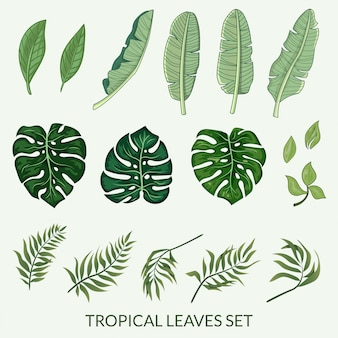 Conjunto de folhas tropicais vector