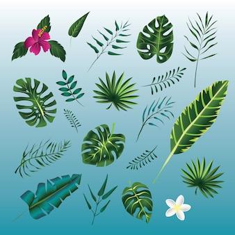 Conjunto de folhas verdes de plantas tropicais. .