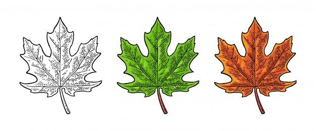Conjunto de folhas verdes e laranja de bordo
