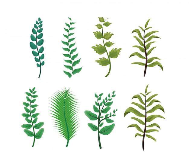 Conjunto de folhas verdes em branco, natureza