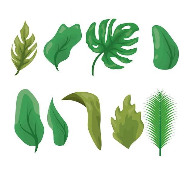 Conjunto de folhas verdes em branco