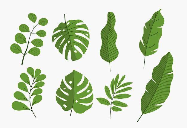 Conjunto de folhas verdes isoladas.