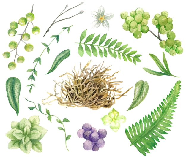 Conjunto de folhas verdes, ramos, feno, bagas e pequenas flores
