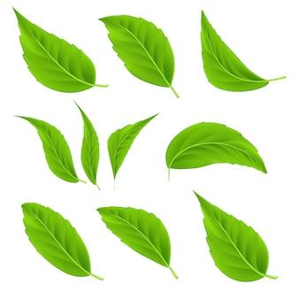 Conjunto de folhas verdes realistas de vetor folhas de árvores de verão 3d detalhadas para produtos biológicos e saudáveis