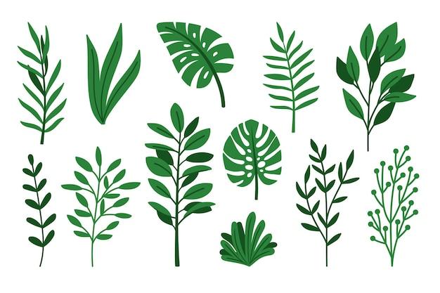 Conjunto de folhas verdes