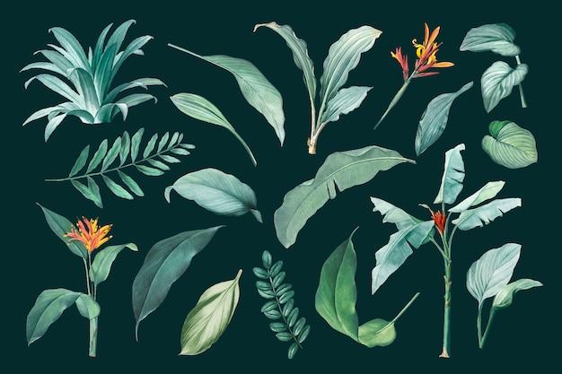 Conjunto de folhas