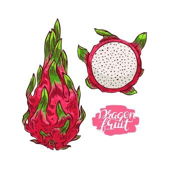 Conjunto de fruta madura do dragão colorido. ilustração desenhada à mão