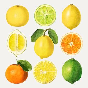 Conjunto de frutas cítricas desenhadas à mão