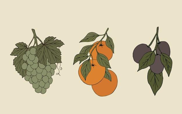 Conjunto de frutas desenhadas à mão