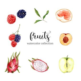Conjunto de frutas em aquarela e mão desenhada