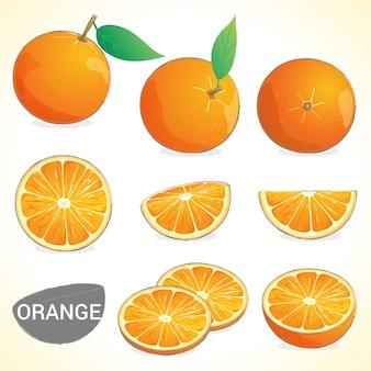 Conjunto de frutas laranja em vários estilos vector format