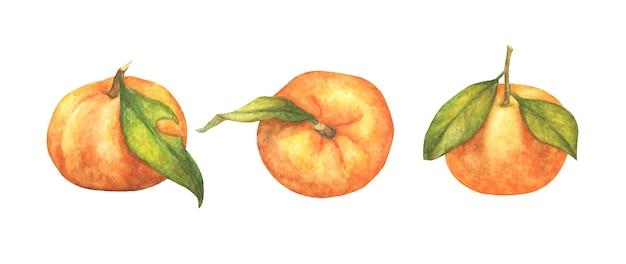 Conjunto de frutas laranjas.