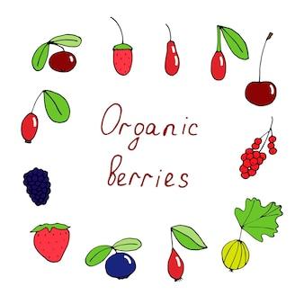 Conjunto de frutas orgânicas, ilustração vetorial de doodle, coloridas