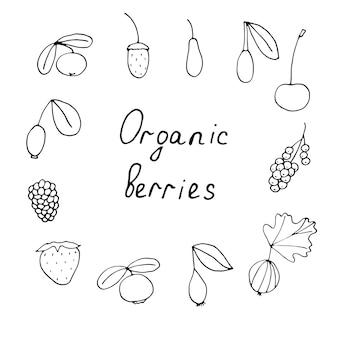 Conjunto de frutas orgânicas, ilustração vetorial de doodle