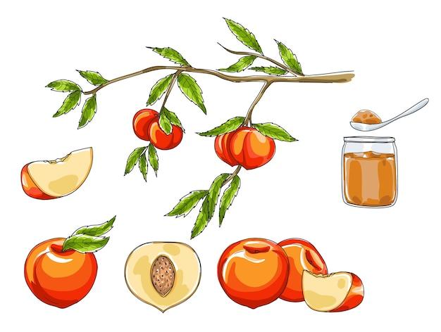 Conjunto de frutas pêssego mão desenhada arte vetorial