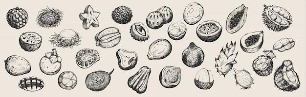 Conjunto de frutas tropicais de mão desenhada da tailândia em fundo branco.