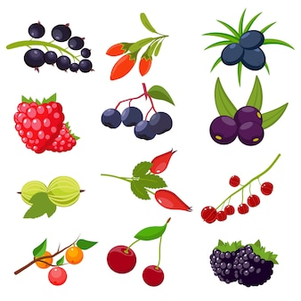 Conjunto de frutas vermelhas, groselha, cereja, framboesa, sorveira, groselha, rosa brava, zimbro de goji de amora