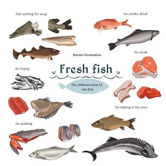 Conjunto de frutos do mar de esboço colorido