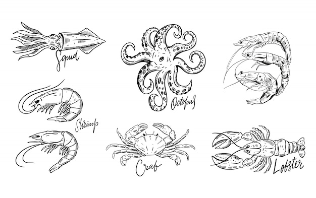Conjunto de frutos do mar. ilustrações de mão desenhada. isolado no fundo branco