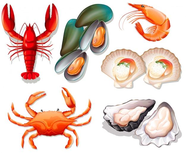 Conjunto de frutos do mar no fundo branco