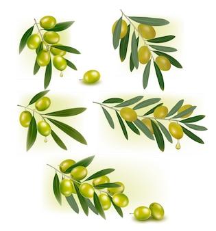 Conjunto de fundos com azeitonas verdes