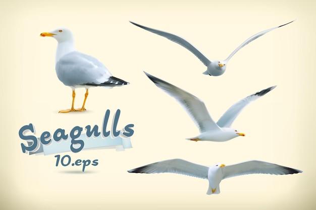 Conjunto de gaivotas