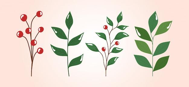 Conjunto de galhos com folhas e sementes