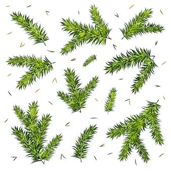 Conjunto de galhos de árvore de natal isolado no fundo branco