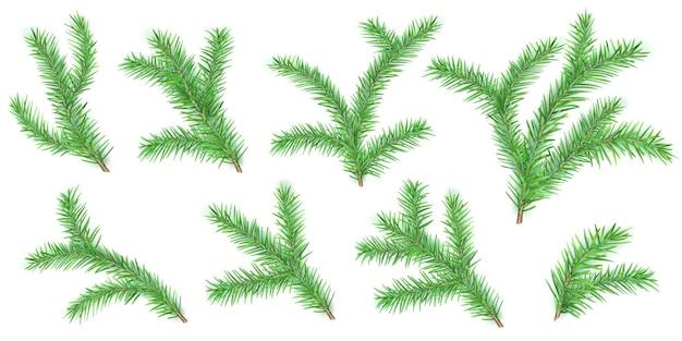 Conjunto de galhos de árvores de natal com sombras em branco Vetor Premium