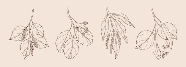 Conjunto de galhos de árvores desenhados à mão