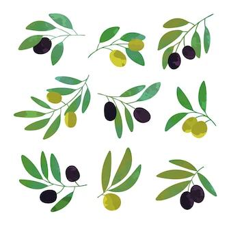 Conjunto de galhos de oliveira de ilustrações coloridas