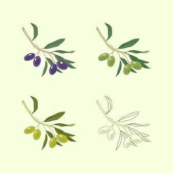 Conjunto de galhos de oliveira