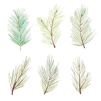 Conjunto de galhos de pinheiro em aquarela. galhos de agulhas de pinheiro florestal