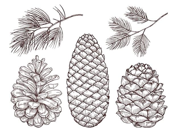 Conjunto de galhos e pinhões esboçados de pinheiro