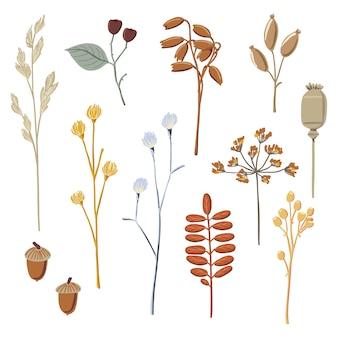 Conjunto de galhos secos de outono outono