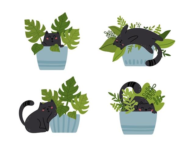 Conjunto de gatinho engraçado e vasos de plantas caseiras