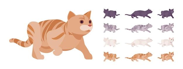 Conjunto de gatinhos com pedigree listrado branco, preto, laranja e cinza