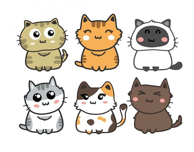 Conjunto de gato bonito