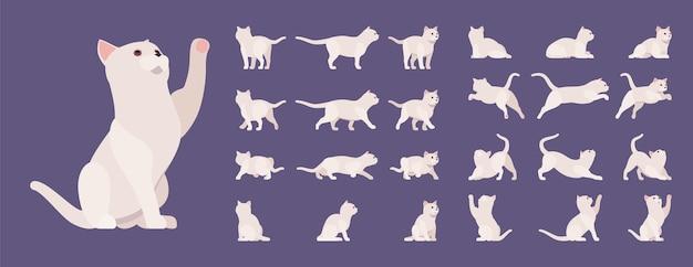 Conjunto de gato branco de pedigree. gatinho ativo e saudável com pelo bonito, casaco leve, animal de estimação fofo, companheiro lúdico em casa. ilustração em vetor estilo plano dos desenhos animados isolada, fundo branco, diferentes pontos de vista, pose