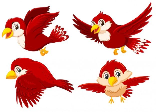 Conjunto de giros pássaros vermelhos