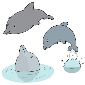 Conjunto de golfinho
