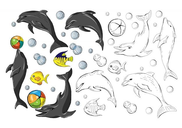 Conjunto de golfinhos e peixes coloridos