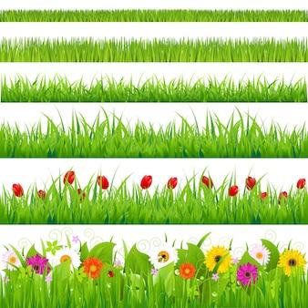 Conjunto de grama grande e flores, isolado no fundo branco,