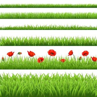 Conjunto de grama verde com papoila vermelha, isolado no fundo branco.