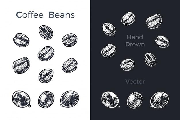 Conjunto de grãos de café mão desenhada