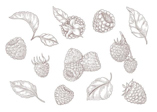 Conjunto de gravura de desenhos monocromáticos de framboesa
