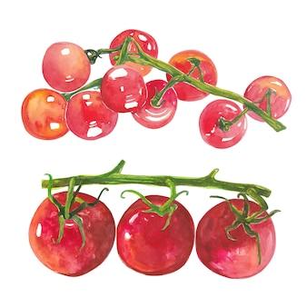 Conjunto de grupo de elemento artístico vermelho aquarela de tomates