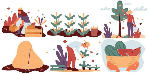 Conjunto de homens e mulheres colhendo safras de outono no jardim ou na fazenda. ilustração em vetor plana