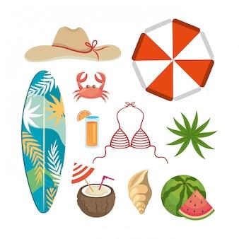 Conjunto de horário de verão com folhas de plantas exóticas e temporada de viagens. isolado